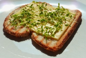 Breedbladige tuinkers op brood met kaas.