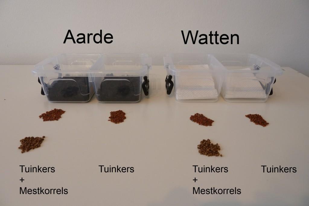 Experiment invloed mest op kieming tuinkers