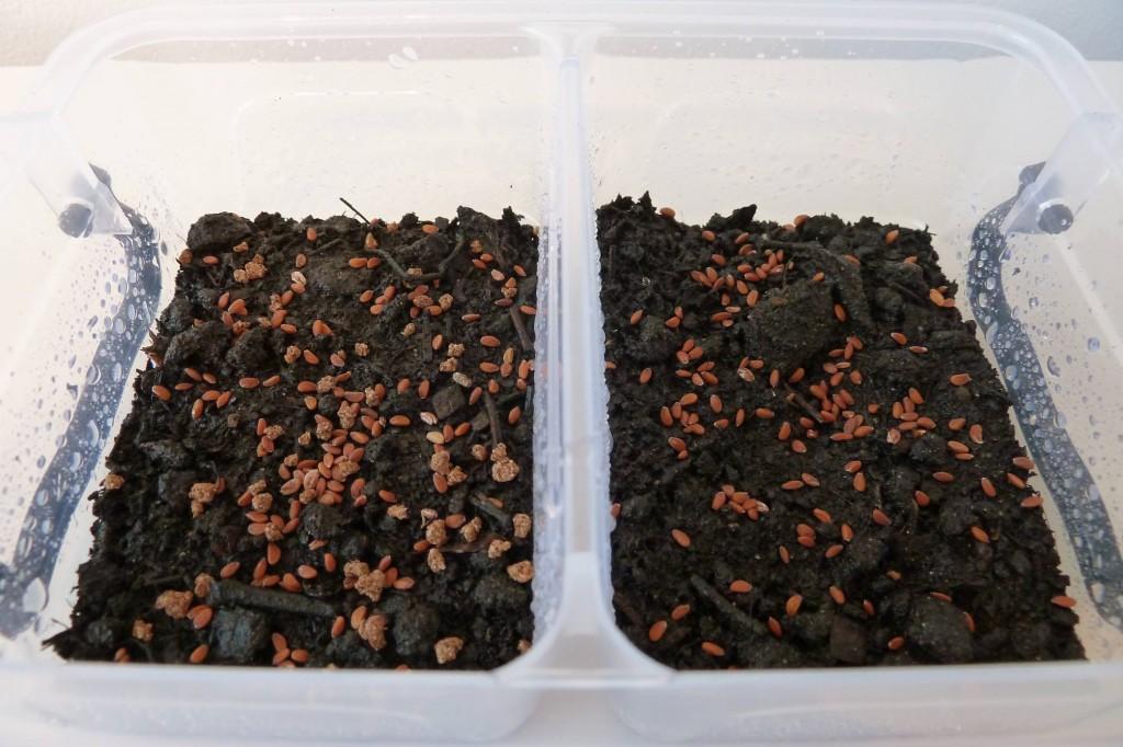 tuinkers kweken mest aarde