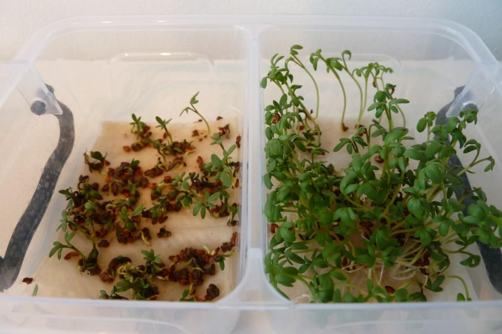 tuinkers kweken mest watten