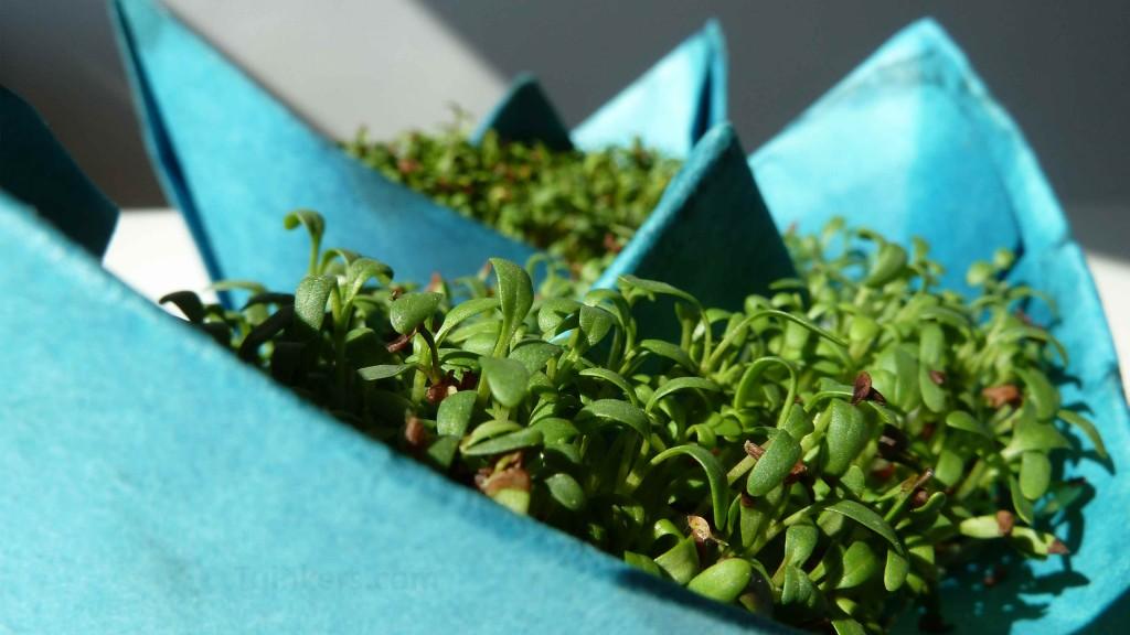 tuinkersboot tuinkers knutselen kweken